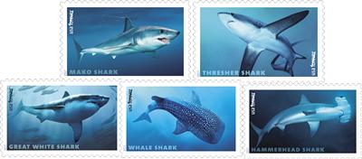 sharksforever