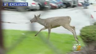 post-office-deer